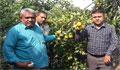 নাটোরের বাগাতিপাড়ায় কমলা চাষে কৃষকের চমক