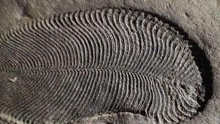 বিশ্বের প্রথম প্রাণী দেখতে যেমন ছিল
