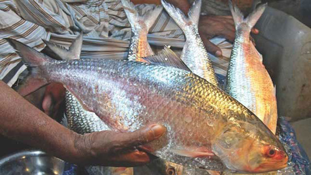 22-day ban on hilsa fishing from Oct 7