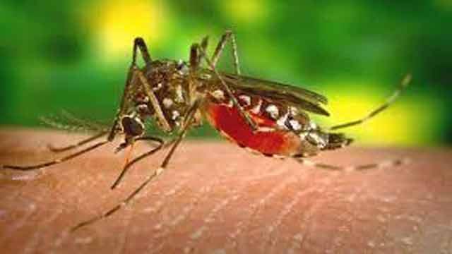 স্ত্রীর ডেঙ্গু, ক্ষতিপূরণ চেয়ে ডিএনসিসিকে লিগ্যাল নোটিশ