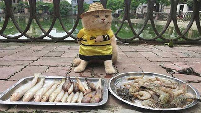 বাজারের জনপ্রিয় মাছ বিক্রেতা বিড়াল!