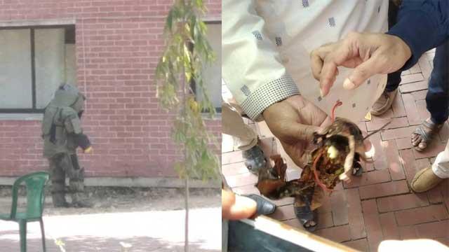 চবিতে 'বোমা' দেখে সারারাত পুলিশি পাহারা, পরদিন বেগুন উদ্ধার!