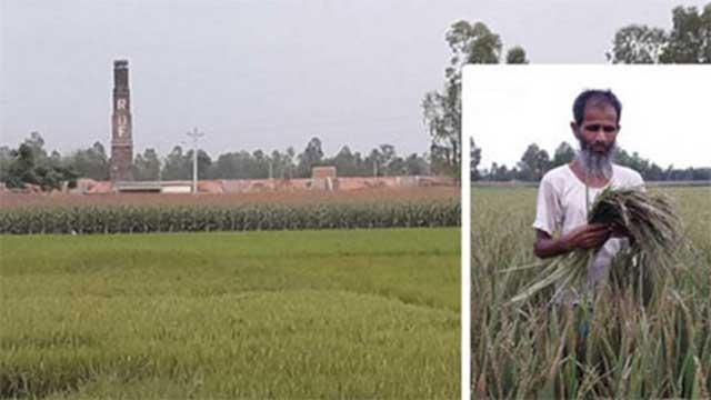 ৪ ইটভাটায় সর্বশান্ত দিনাজপুরের দুই উপজেলার কৃষক