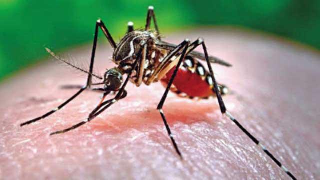 Dengue infection increasing, cases cross 1500 mark in Bangladesh