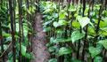 রাজশাহীতে শৈত্যপ্রবাহে পানচাষি ও ব্যবসায়ীদের ক্ষতি কোটি টাকা
