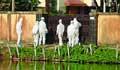 মৌলভীবাজারে লন্ডন ফেরত নারীর মৃত্যু, ৫ বাসা লকডাউন