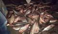 3 cops suspends for transporting mother Hilsa