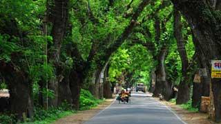 Moratorium on felling Jessore road trees