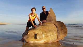 বালিতে সাঁতার কাটছিল 'দৈত্য মাছ'