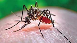 13 dengue patients hospitalised in 24 hours