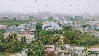 দিল্লিতে ঢুকে পড়েছে লাখ লাখ পঙ্গপাল