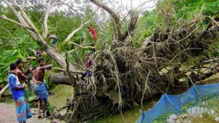 Cyclone Bulbul: 4,589 trees damaged in Sundarbans