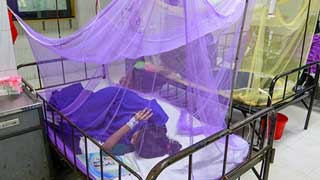 256 more dengue patients hospitalised in 24 hours