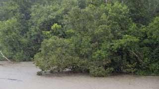 ঘূর্ণিঝড় আম্ফানে সুন্দরবনে উপড়ে পড়েছে ১২,৩৫৮টি গাছ