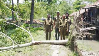 Amphan damages Sundarbans infrastructures, trees worth Tk 1.67 cr