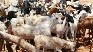 BCL leader prosecuted for attempted snatch of goats