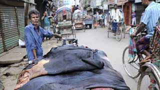 Govt sets rawhide prices 30 pc lower than last year