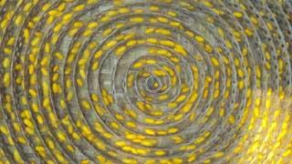 ভোলাহাটে রেশমের বাম্পার ফলনে চাষিদের মুখে হাসি